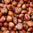 Chestnut fruit of autumn brown — Stock Photo #1025238