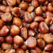 Chestnut fruit of autumn brown - Stock Photo