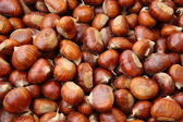 Chestnut fruit of autumn brown — Stock Photo