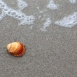 Shell on the waterline - Stock Photo