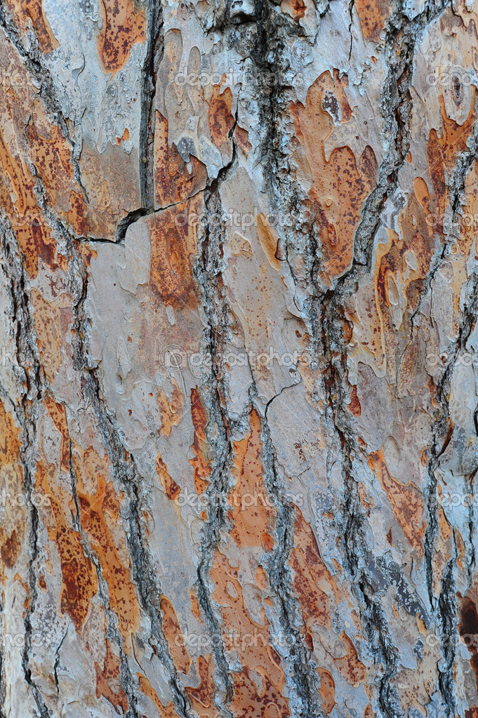 Detailed Pine Tree Bark Texture, Natural Background — Stock Photo #1034321
