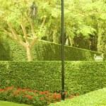 Garden — Stock Photo #1069237