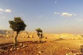 ユダヤの山地 — ストック写真