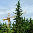 Construction in a coniferous wood - Stock Photo
