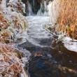 Non-freezing creek — Stock Photo
