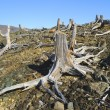Stock Photo: Stumps