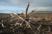 Roots of a dead tree — Stock Photo