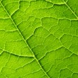 Stock Photo: Leaf texture