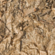 Old leaves texture — Stock Photo