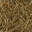 Stock Photo: Pine needles