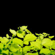 Foto de Stock  : Green leaves border