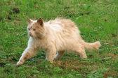 无家可归的猫 — 图库照片