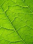 Leaf texture — Stock Photo