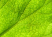 Leaf texture 3 — Stock Photo