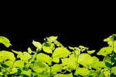Green leaves border — Stockfoto