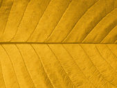Autumn leaf texture — Stock Photo
