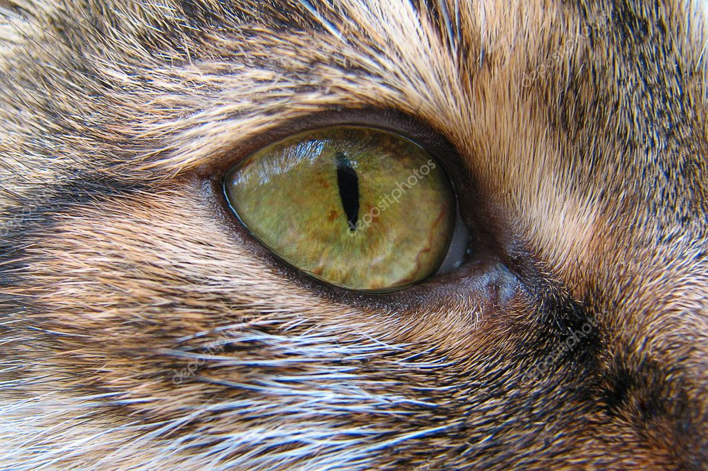 The close-up photo of a cat's eye  Stock Photo #1030831