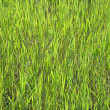 Stock Photo: Green grass texture