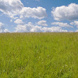 Field and sky — Stock Photo #1040612