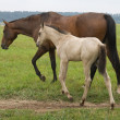 Stock Photo: Horse with her foal