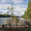Karelian landscape — Stock Photo