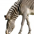Zebra — Stock Photo #1041315