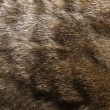 Royalty-Free Stock Photo: Cat fur texture