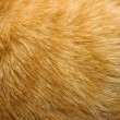 Cat fur texture — Stock Photo #1041450