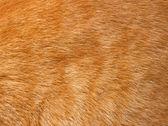 Cat fur texture — Stock Photo