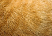 Cat fur texture — Stock Photo