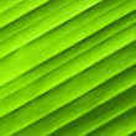 Leaf texture — Stock Photo #2404415