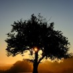 Tree a silhouette — Stock Photo