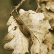 Dead leaves — Photo
