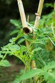 緑の植物 — ストック写真