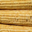 Royalty-Free Stock Photo: Indian corn