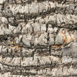 Bark of palm - Stock Photo