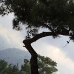 Bent tree — Stock Photo