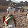 Stock Photo: Travel on camels