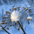 Foto Stock: Flower and snow