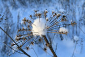 Flower and snow — Stockfoto