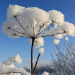 The snow covered plant — Stock Photo