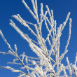 The snow branch of plant — Stock Photo