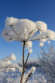 The snow covered plant — Foto Stock