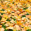 Falling leafs on forest grass. Autumn — Stock Photo