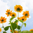 Yellow flowers — Stockfoto #1045543