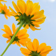 Yellow flowers — Stock Photo #1045558