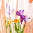 Rich spring flowers — Stock Photo #1098888