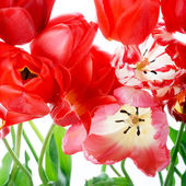 Beautiful spring flowers — Stockfoto
