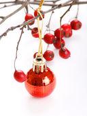 Winter berries — Stockfoto