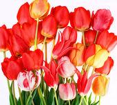 τα όμορφα λουλούδια άνοιξη — Φωτογραφία Αρχείου
